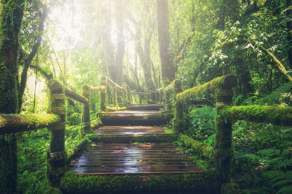 la importancia de convivir en un entorno natural