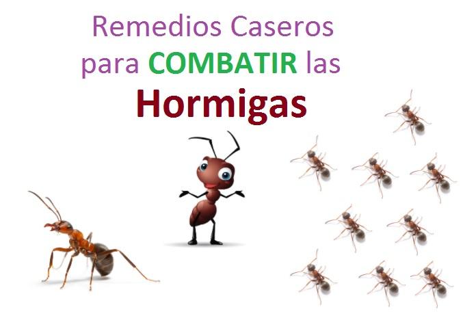las hormigas pueden llegar a invadir (literalmente su casa)